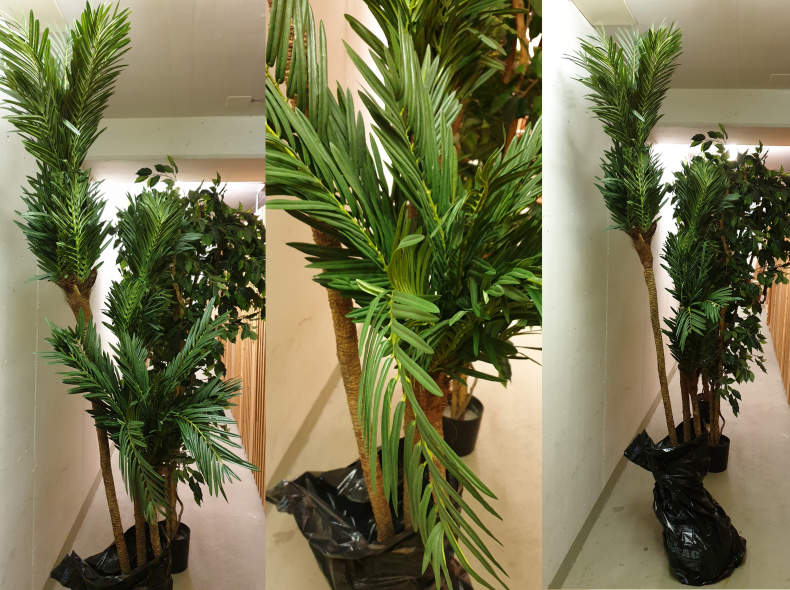 28210 Cycas Palme, 3 teilig gestuft, grün